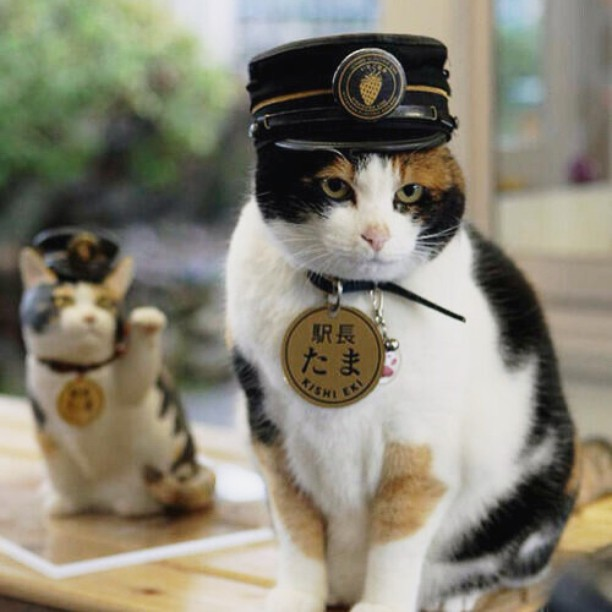 Tama the famous feline stationmaster has sadly passed away buthellip
