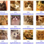 Cat cafes in Japan