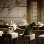 Cats at a sushi train? Genius!