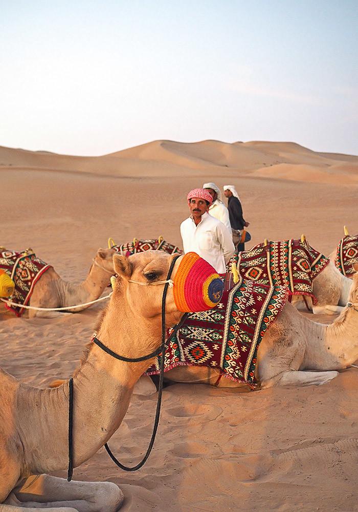 camels-waiting