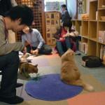 Cat cafes in Japan