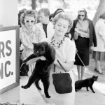 Black cat auditions, Hollywood 1961