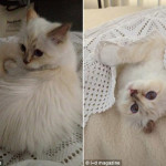 Choupette Lagerfeld, the fanciest cat in fashion