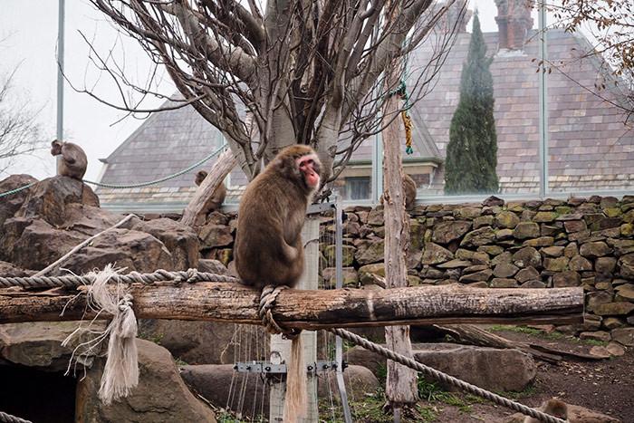 city-park-monkeys1