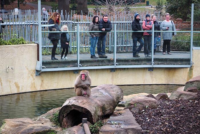 city-park-monkeys3