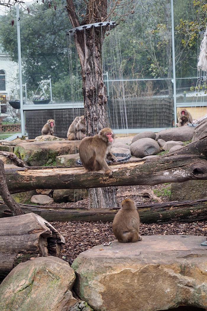 city-park-monkeys4