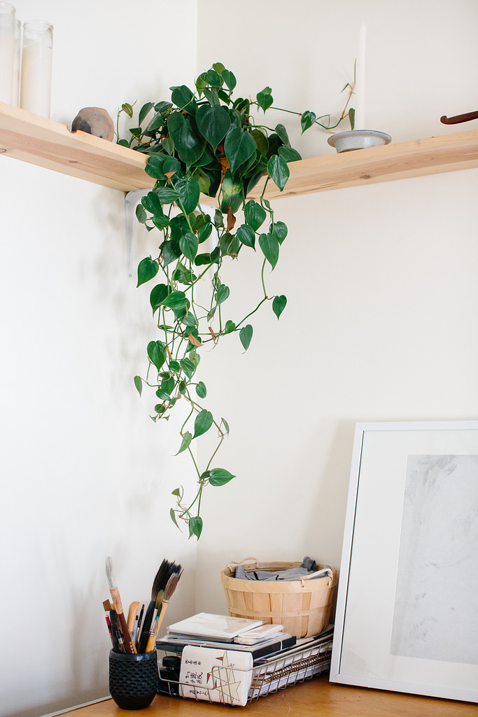 5 Of The Best Indoor Plants For Serial Plant Killers