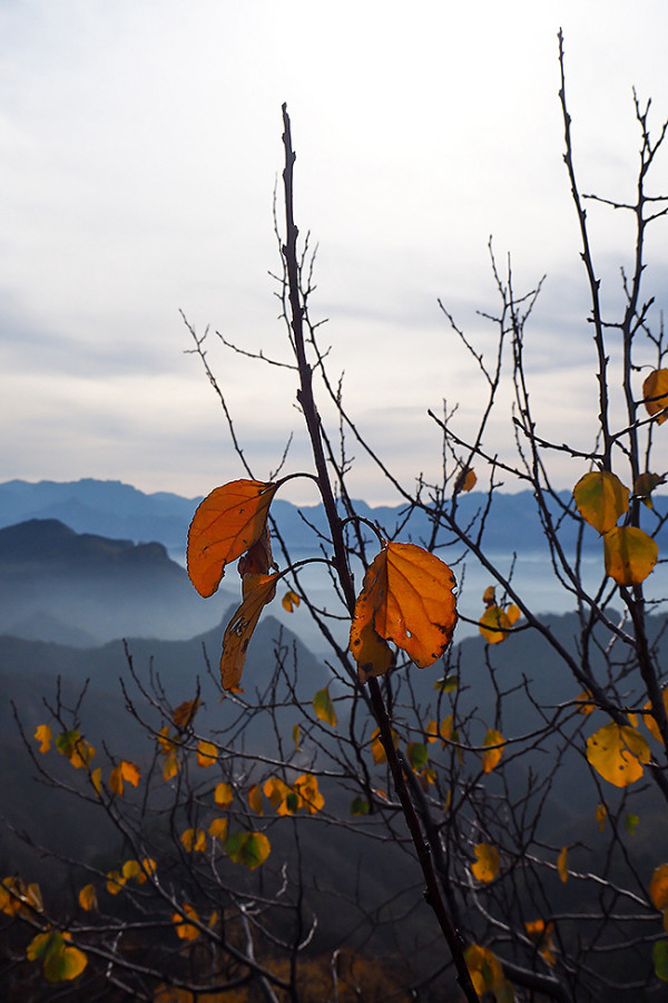 great-wall-of-china-leaves