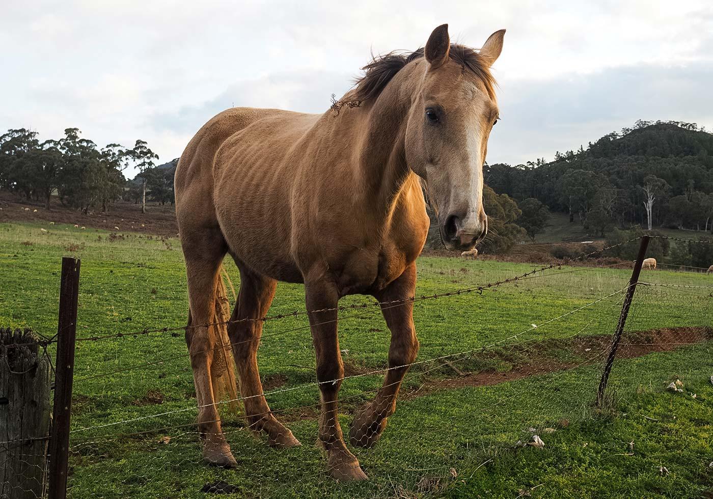 horse-orange