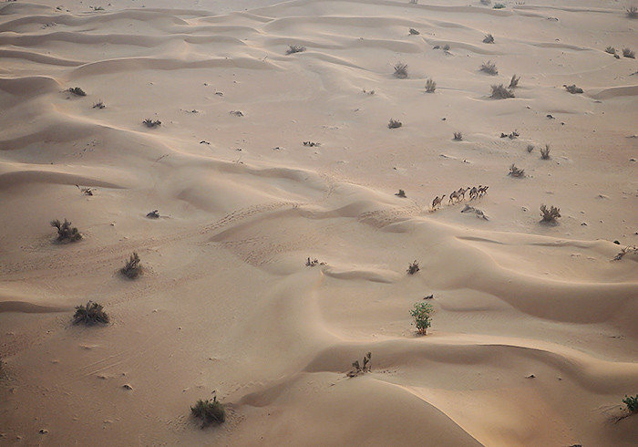 hot-air-ballooning-camels1