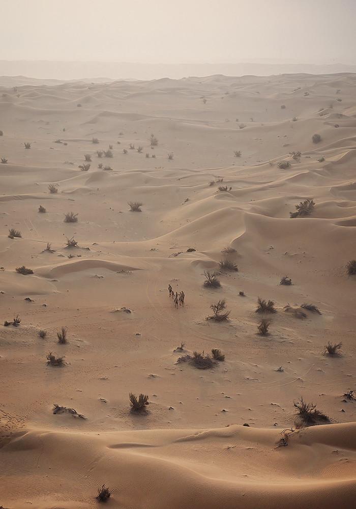hot-air-ballooning-camels2