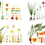 Deconstructed Food Styling