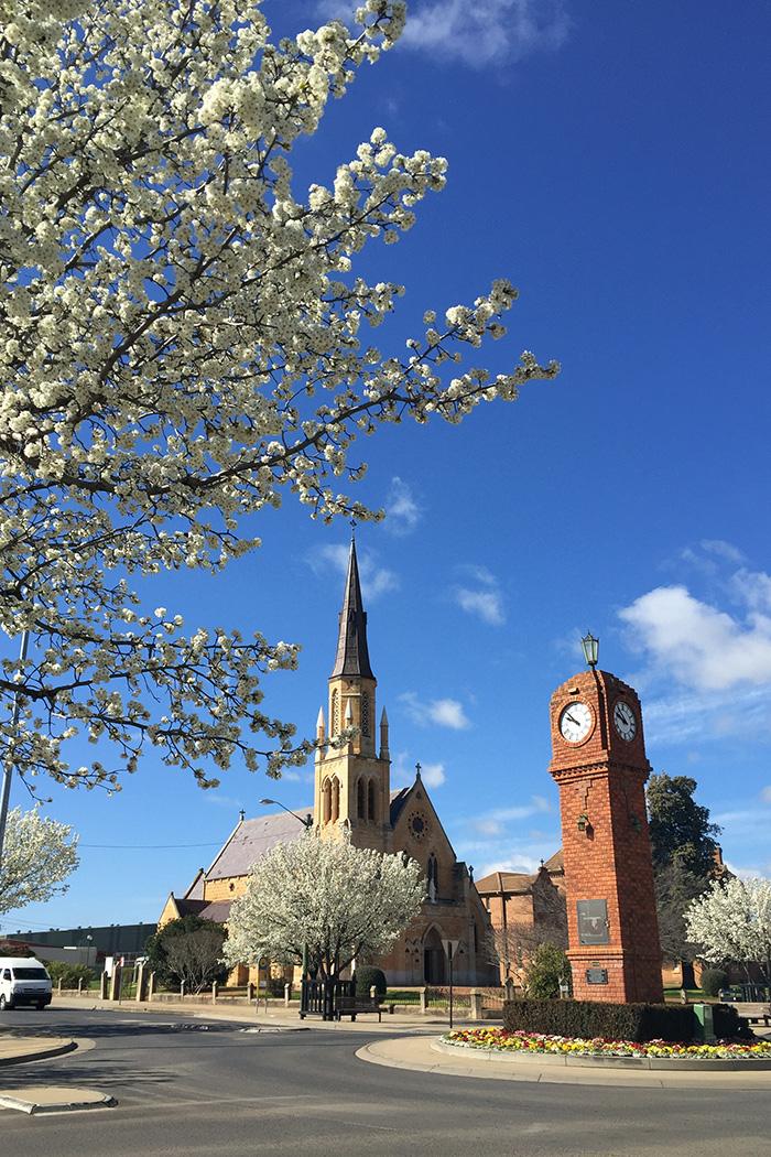 mudgee-church-blossoms