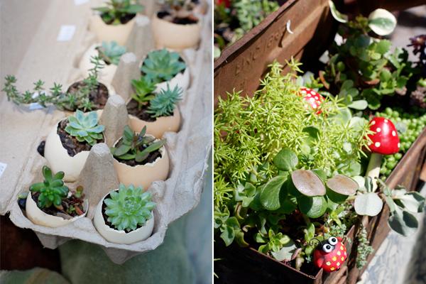plants-salamanca