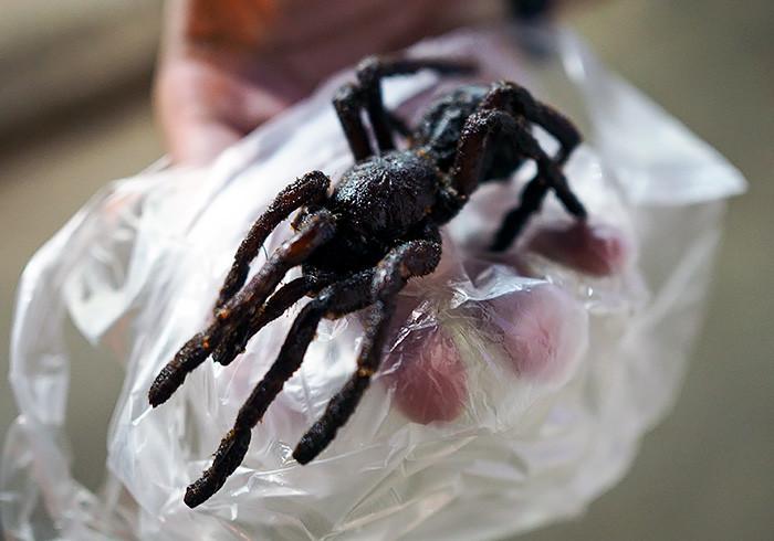 tarantula-siem-reap