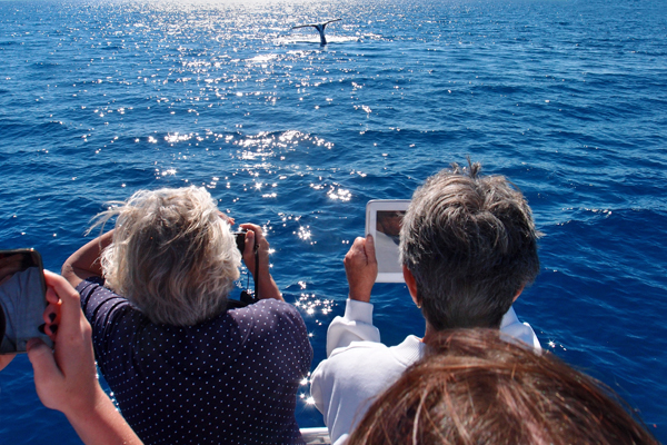 whale-watching-hervey-bay-cameras