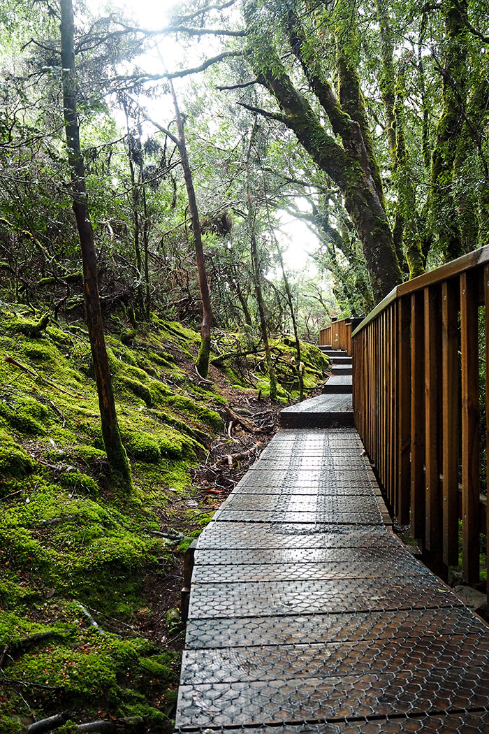 cradle-mountain-boardwalk