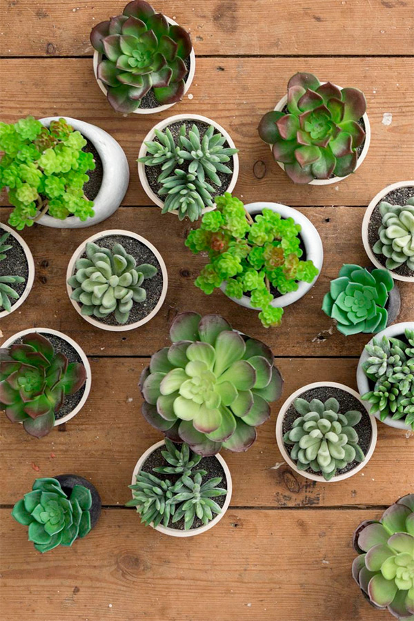 succulents-the-hall